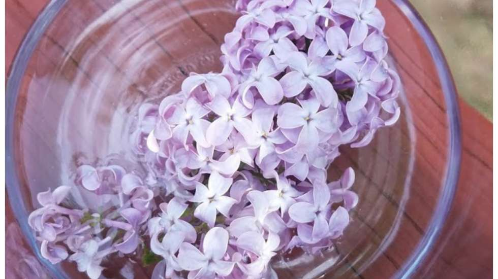 How to make a mother flower essence