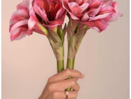 Hazardous pesticides on cut flowers