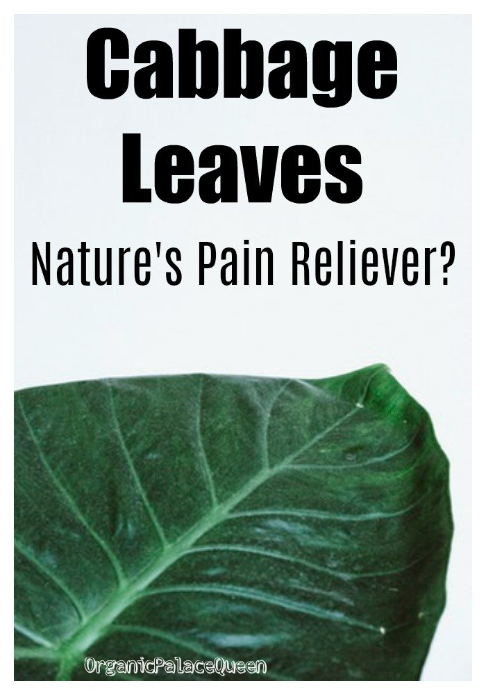 Can cabbage leaf wraps relieve pain