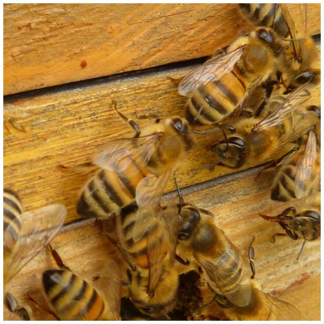5 things you can make with beeswax