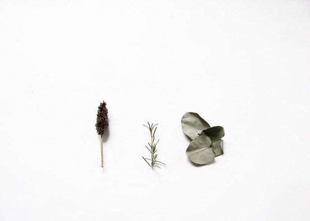 cuándo y cómo utilizar plantas medicinales