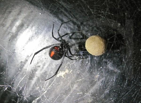casa organizar insectos indeseados hogar casa telarañas organización