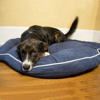 Bolster Dog Bed - Denim in Pet Beds