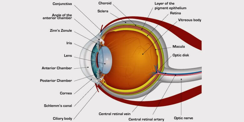 The Human Eye Facts Functions Structure And Problems