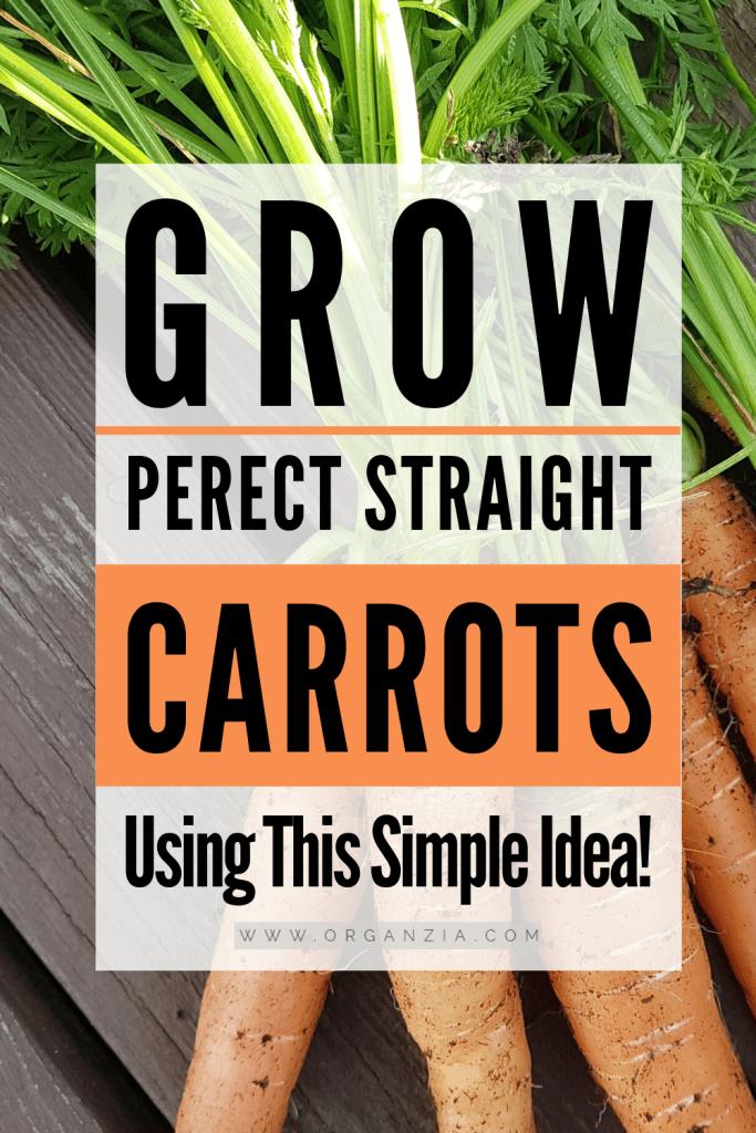 Grow Straight Carrots in milk cartons