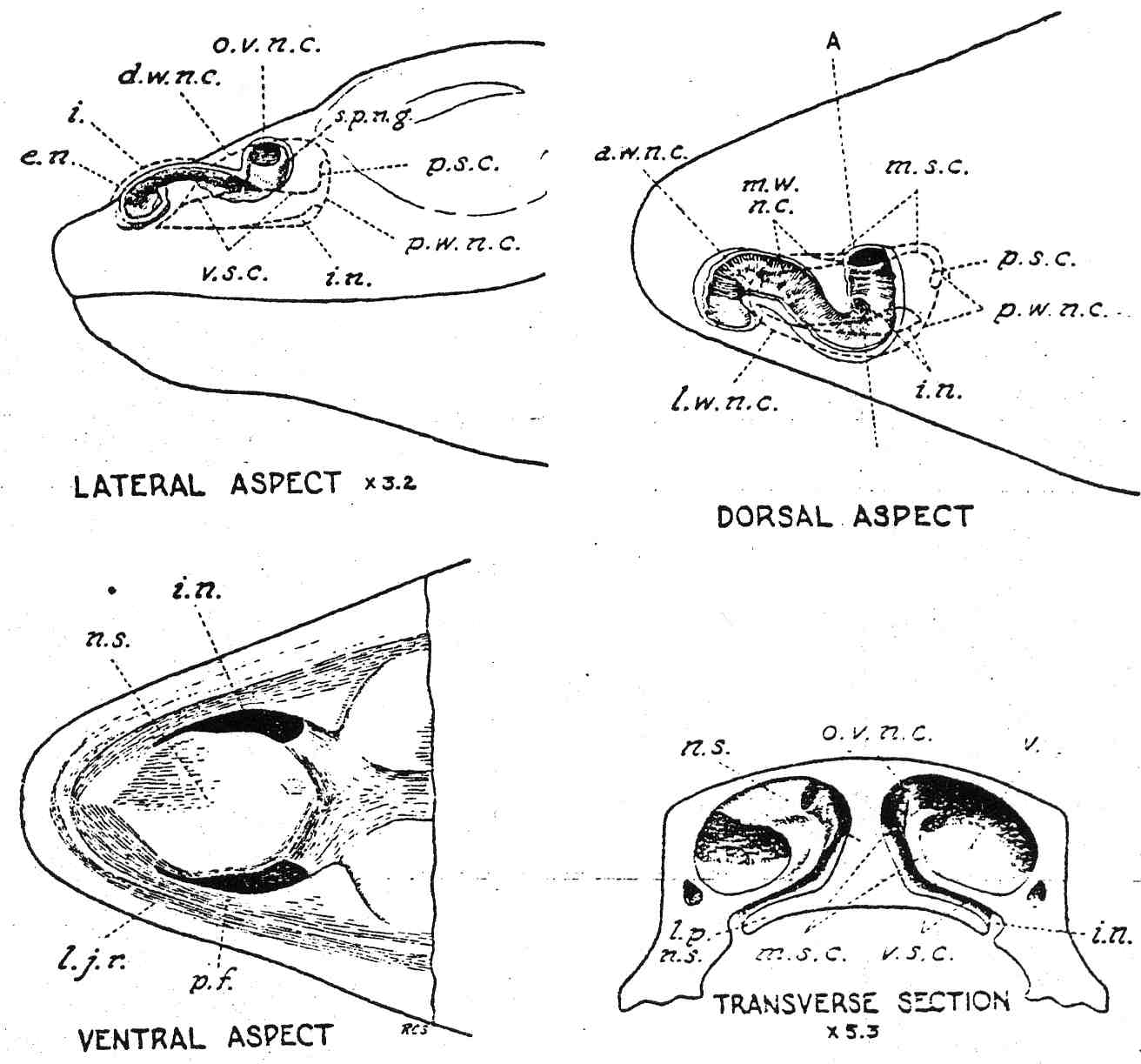 Anatomy Of Nasal Passages