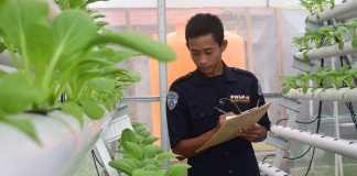 Mahasiswa Polbangtan Manokwari Gunakan Dokumentasi Video Hodroponik Bahan Belajar Online