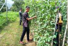 Panen Sayuran, Tani Milenial Polbangtan Manokwari Terapkan Protokol Penanganan COVID-19
