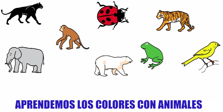 Aprende los colores con este divertido video de animales y lotos ...
