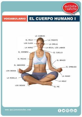 lamina para aprende vocabulario el cuerpo humano