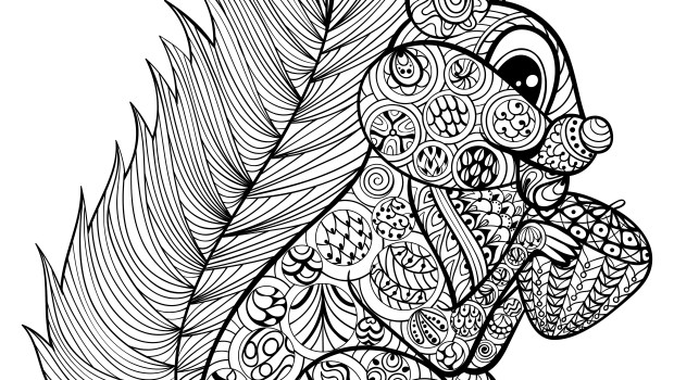 Image Result For Squirrel Coloring Page