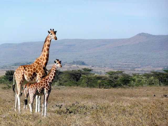 Affordable International Destinations For Indians - kenya