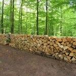 Master FAGE : forêt, agronomie et environnement