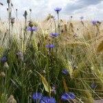 Licence pro Restauration écologique et développement durable