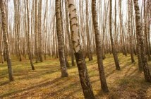 Licence pro forêt et environnement