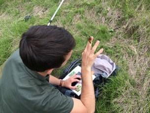 formation pour devenir naturaliste à Montpellier