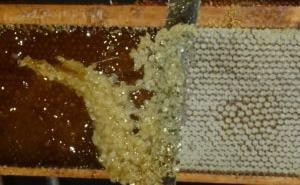 emploi produits de la ruche
