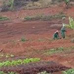 Le projet agro-écologique Beleaf à Madagascar