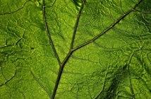 biocontrôle santé des plantes