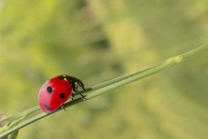 master green risques environnement