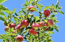 licence professionnelle agriculture biologique