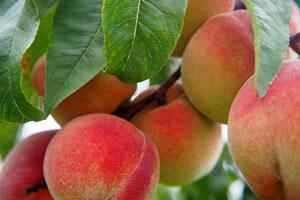 formation production végétale Agroécologique