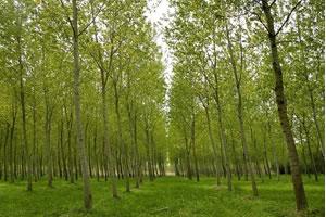 formation conseiller forestier