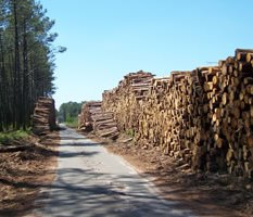 métiers bois et forêt