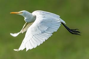 orntihologie études des oiseaux
