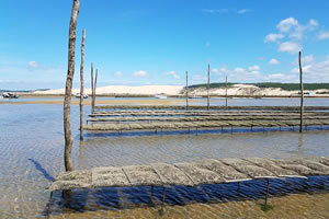 emploi aquaculture conchyliculture