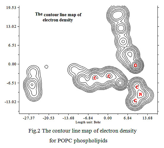 An Electrochemical Study of POPC Phospholipid Bilayers in