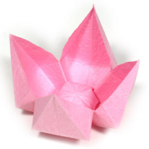 origami flower diagram in english the biggest ear how to make lotus flowers simple