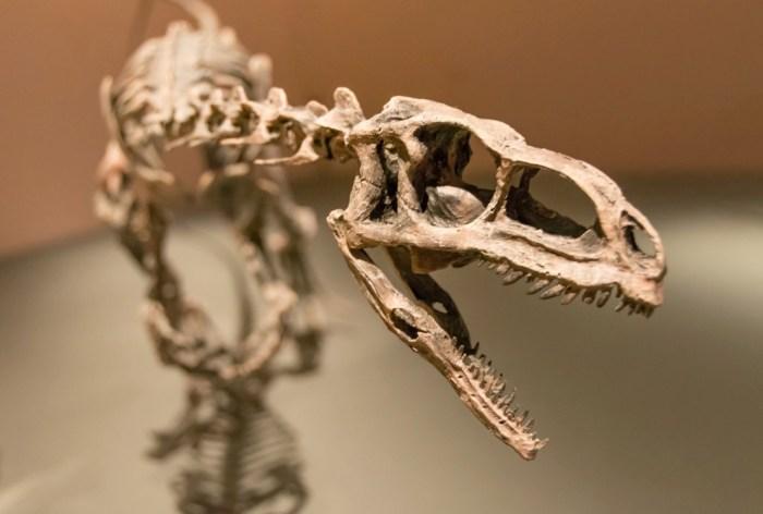 Динозавры фото
