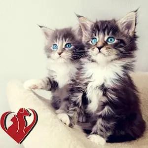orion animal kittens