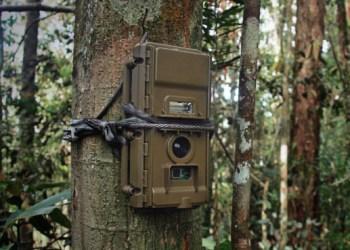 camera-traps-watching-wildlife