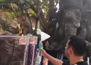 Khan uploaded a video on Instagram in which he was seen offering water in plastic bottle to a monkey, whom he addressed as his 'Bajrangi Bhaijaan.