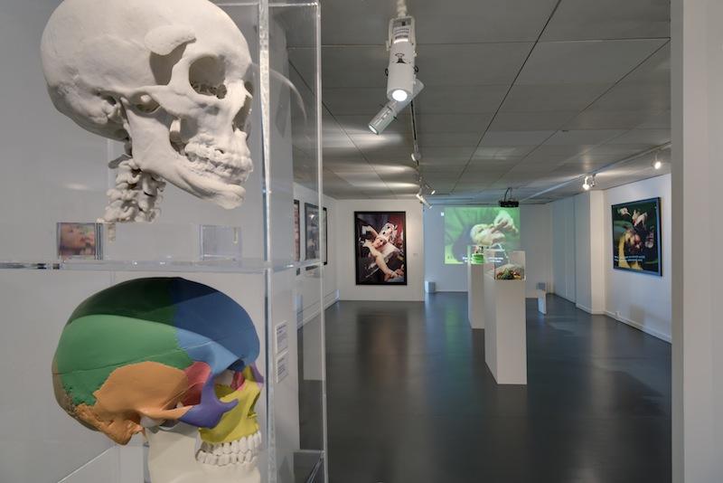 """ORLAN-BODY-OF-SKULL"", exhibition view of ORLAN Striptease from cells to bones, CDA Enghien-les-bains, 2015 / ""ORLAN-CORPS-DE-CRÂNE"", vue d'exposition de ORLAN Striptease des cellules jusqu'à l'os, CDA Enghien-les-bains, 2015"
