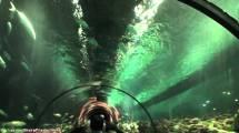 Seaworld Orlando Tickets - Destination Guide
