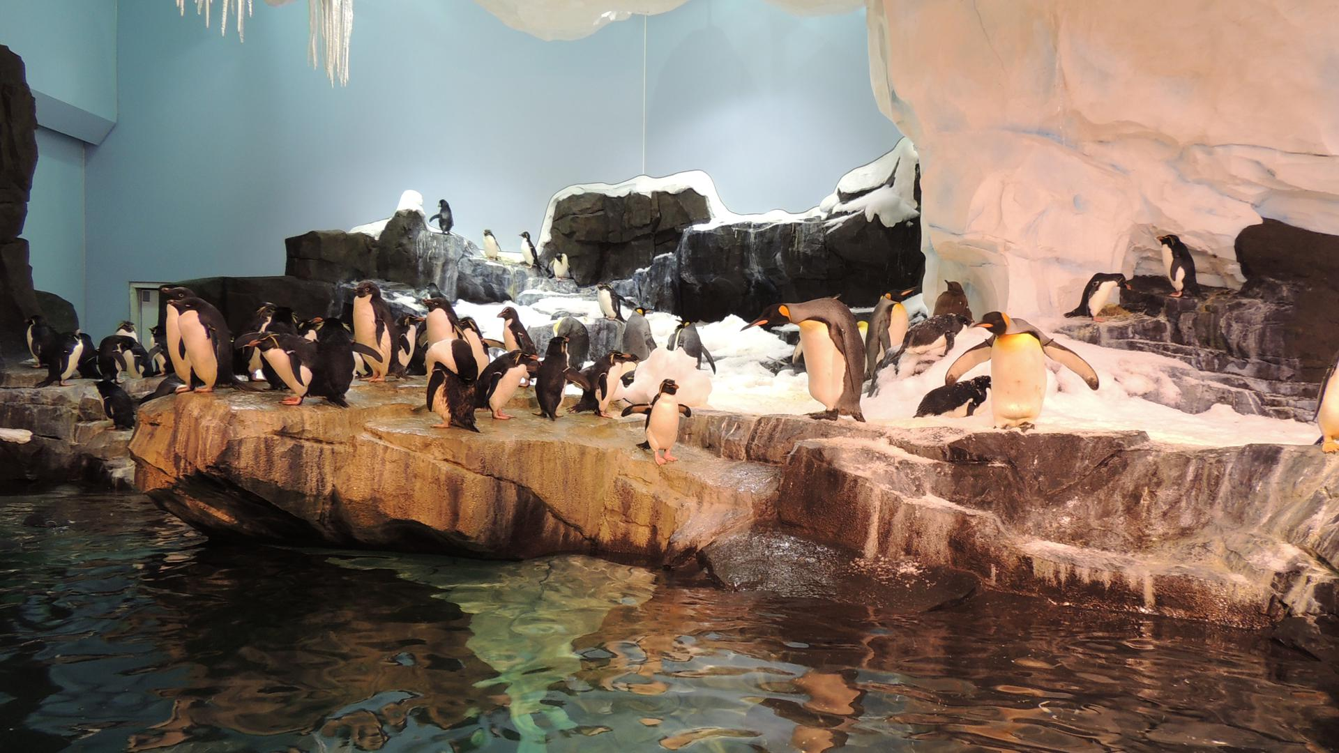 Antarctica Empire of the Penguin  Orlando Tickets