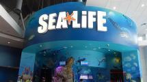 Sea Life Aquarium Orlando - Tickets Hotels Packages