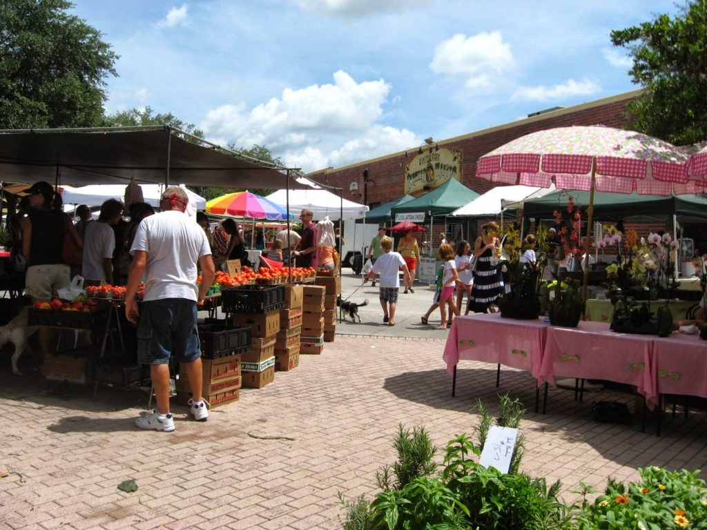 Where Buy Bonsai Plants