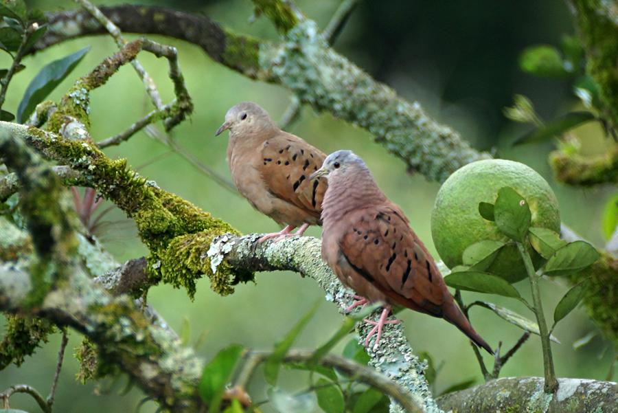 Mapa Ornitolgico Caldas  Sociedad Caldense de Ornitologa