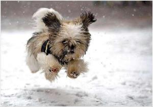 Koer talvel