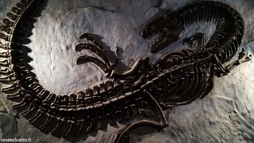 Souvenir fossile