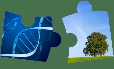genes-environment-puzzle-Organic-Radiance-Skincare
