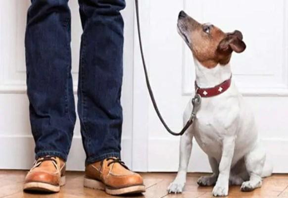 L'obbligo di fedeltà spetta ai cani e alle altre specie animali addomesticate.