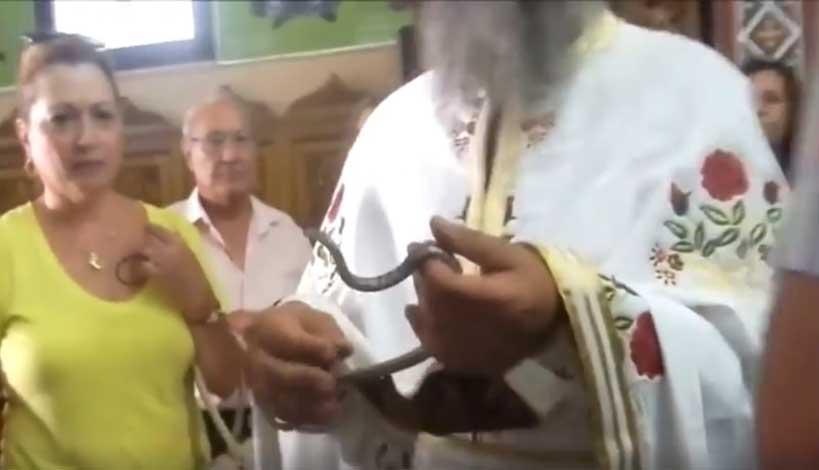 Δείτε το βίντεο με τα Φιδάκια της Παναγίας στην Κεφαλονιά