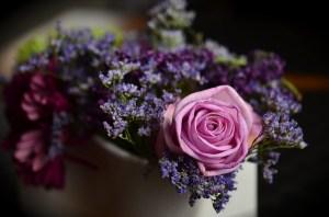 rose-1405552_640