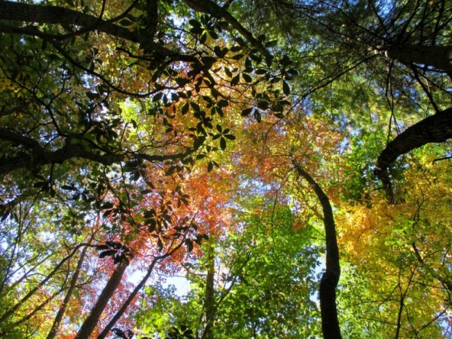 Colorful Tree canopy