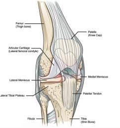 knee anatomy [ 1000 x 900 Pixel ]